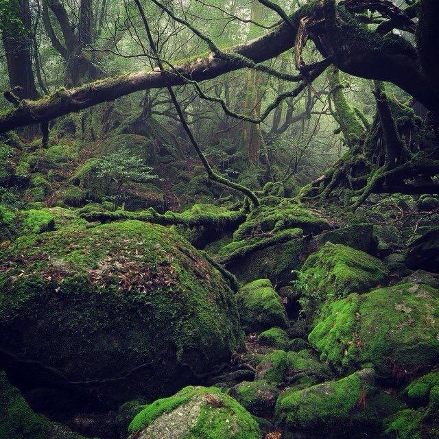 Yakushima Trail & Beach Run : วิ่งตามฝันมิยาซากิ